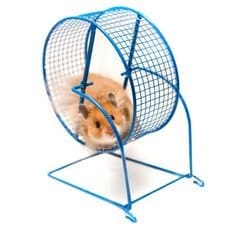 picture of a hamster on a wheel